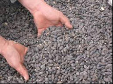 Jatropha Seeds for bio diesel