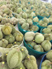 FRESH MONTHONG DURIAN FOR EXPORT