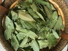 Dried Bay Leaves,Laurel Leaf,Laurus nobilis/Hand Selected Production