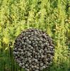 2015 Hemp seeds Products