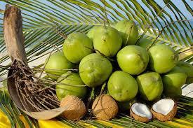 photo coconut water