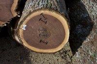 walnut veneer logs four sides clear