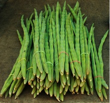 Fresh Indian Drumsticks/Moringa oleifera/Moringa/Mixed Vegetables from India