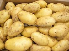 potatoes. White, red