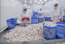 processed Chicken Feet / Frozen Meat & Poultry