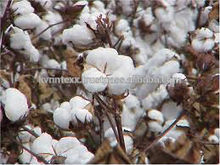 Las fibras de algodón