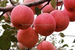 Fresh Fuji Apple Fruit ,Coconut, Fresh Strawberry, Fresh Navel Oranges