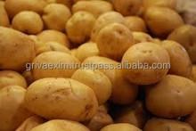 Purple Potato From India