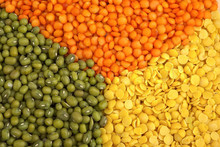 Green, Red and brown Lentils yellow lentils grade A for sale