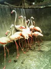 Birds & Reptiles