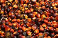 Best Quality Palm Oil CP-10/CP 08
