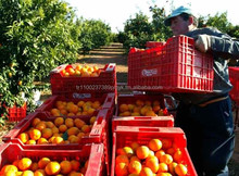 Fresh Valencia Orange, Citrus Fruits High Quality and Wholesale Prices From Turkey