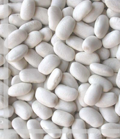 white big beans for America