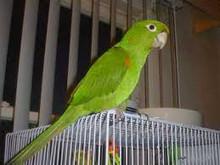 Australian brush turkeyand other birds for sale
