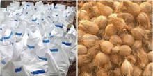 Best Quality Coconut Supply to Mauritius
