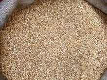 Integrais Quinoa sementes de europeia solos