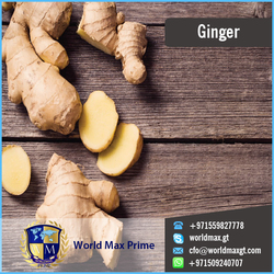 2015 Air Dried Washed Fresh Ginger Dealer