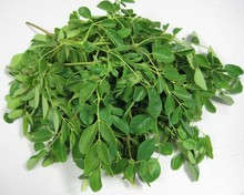 High Quality Moringa leaves Powder Supplier from India