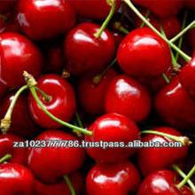 Fresh Cherries VERY HIGH GRADE