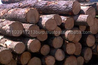 PINE SPRUCE BIRCH OAK ASH LOGS AND Pine logs (Pinus Sylvestris)