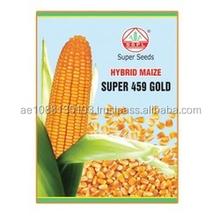 Híbrido maíz semillas