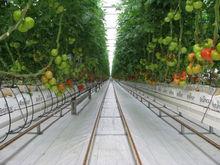 Efectivo Invernadero Hidroponico para NFT Hidroponia / Tomates y Riego por Goteo