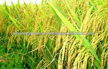 Cheapest- High Quality Vietnamese Jasmine Rice 5% broken-Mr. Alan Hieu( hieu.phuongquan@gmail.com)Manufacturer