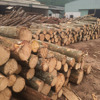 The lowest price and top quality for eucalyptus logs
