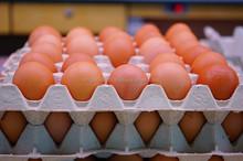 Fresh Fertile Chicken Eggs at cheap prices