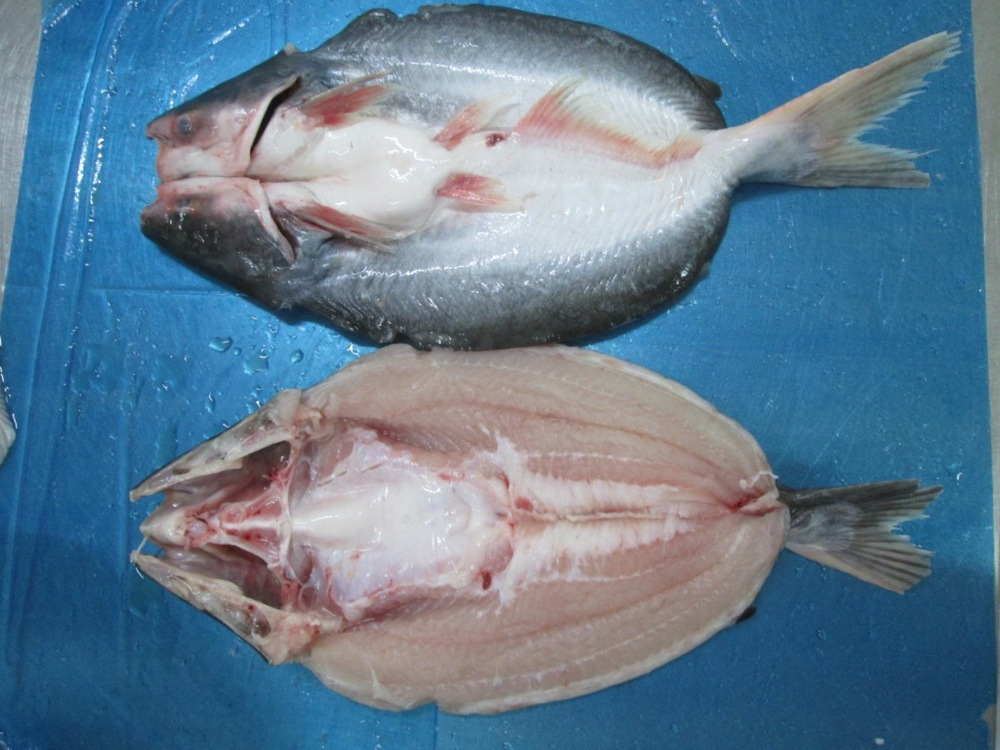 Pangasius butterfly head on buy pangasius fish butterfly for What is pangasius fish
