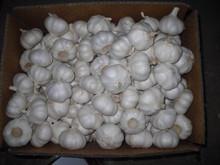2015 New Crop of Fresh garlic/Normal White Garlic/Pure White Garlic