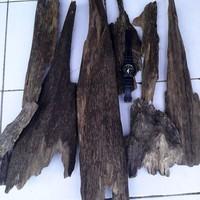 jual kayu gaharu super king papua