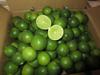 Fresh Green Lime / Lemon / Green Lemon from Vietnam