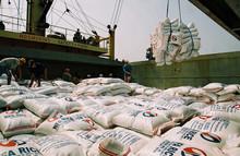 Vietnamese long grain white rice 5% - 10% - 15% - 25% - 100% broken