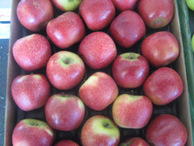 Top Quality Fresh Fuji Apple