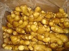 fresh ginger 2015 crop