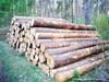 tali wood logs 70cm+