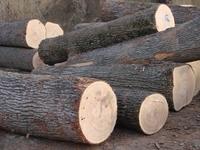 High quality oak wood, oak logs, round timber