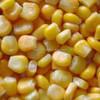 /product-tp/kuning-jagung-dijual-138033116.html