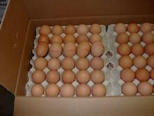 De primera calidad holanda huevos frescos