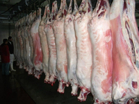 HALAL LAMB MEAT, Sheep Meat AND GOAT MEAT READY FOR EXPORT