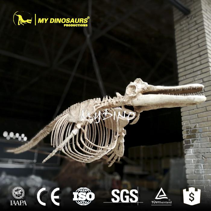 dolphin skeleton replica 1.jpg